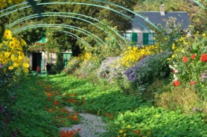 Nasturtium Archway in Garden