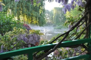 On Monet's Bridge With Wisteria