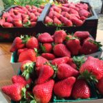 Strawberries at Manassero Farms